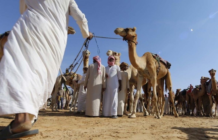 Camels prepare to race during the Liwa 2017 Moreeb Dune Festival on January 3, 2017, in the Liwa desert, some 250 kilometers west of the Gulf emirate of Abu Dhabi. The festival, which attracts participants from around the Gulf region, includes a variety of races (cars, bikes, falcons, camels and horses) or other activities aimed at promoting the country's folklore. (KARIM SAHIB/AFP/Getty Images)