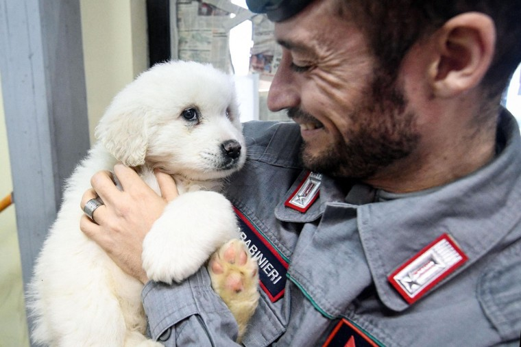 A Carabinieri (Italian paramilitary police) officer officer holds one of three puppies that were found alive in the rubble of the avalanche-hit Hotel Rigopiano, near Farindola, central Italy, Monday, Jan. 22, 2017. Emergency crews digging into an avalanche-slammed hotel were cheered Monday by the discovery of three puppies who had survived for days under tons of snow, giving them new hope for the 23 people still missing in the disaster. (Alessandro Di Meo/ANSA via AP)