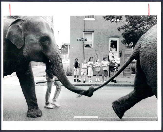 West Baltimore Residents watch as the Ringling Bros. Circus animals travel east on West Pratt as they parade to the Baltimore Arena in 1992. (Baltimore Sun)