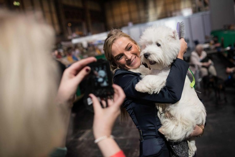 A woman poses for a photograph with her prize-winning West Highland White Terrier dog on the first day of the Crufts dog show at the National Exhibition Centre in Birmingham, central England, on March 9, 2017. (OLI SCARFF/AFP/Getty Images)