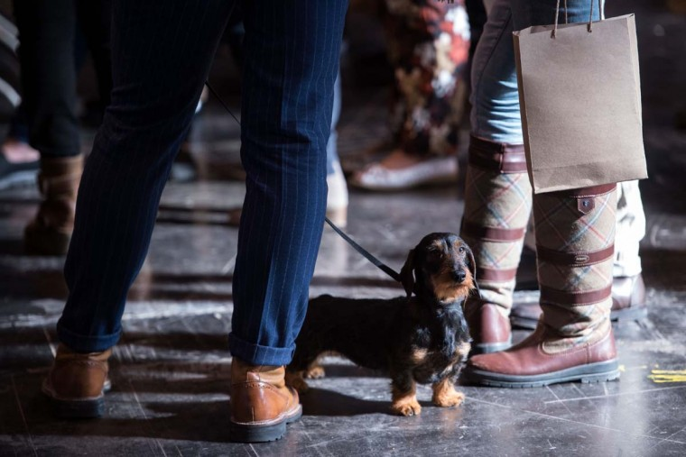 A Miniature Wirehaired Dachshund stands among a crowd of people on the first day of the Crufts dog show at the National Exhibition Centre in Birmingham, central England, on March 9, 2017. (OLI SCARFF/AFP/Getty Images)