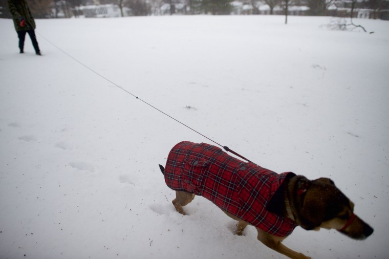 "Joel Gyimesi, 32, walks his dog ""Philly"" through Gorgas Park in the snow March 14, 2017 in Philadelphia, Pennsylvania. Much of the Northeast is under a state of emergency as a blizzard is expected to bring over one foot of snow and high winds to the area. (Photo by Mark Makela/Getty Images)"