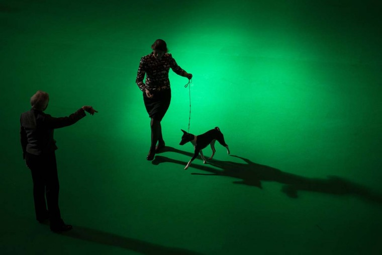A woman runs with a Basenji dog while a judge observes on the first day of the Crufts dog show at the National Exhibition Centre in Birmingham, central England, on March 9, 2017. (OLI SCARFF/AFP/Getty Images)