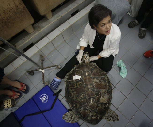 "Head of Chulalongkorn University's veterinary medical aquatic animal research center Nantarika Chansue helps to rehabilitate 25-year-old green sea turtle ""Bank"" in Bangkok, Thailand, Friday, March 10, 2017. Veterinarians operated on Bank Monday to remove 915 coins weighing 5 kilograms (11 pounds) from her stomach, which she swallowed after misguided human passers-by tossed coin into her pool for good luck in eastern Thailand. (AP Photo/Sakchai Lalit)"