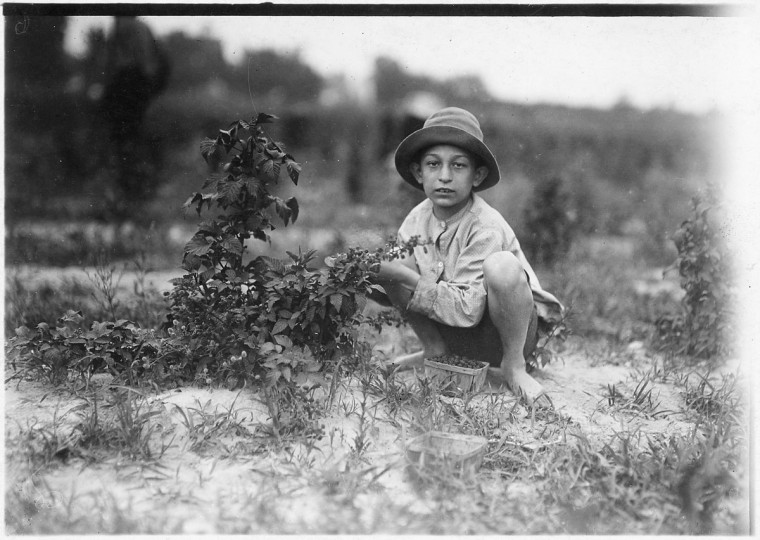 Original Caption: Norris Luvitt. Been picking 3 years in berry fields near Baltimore, June 1909. (Lewis Hine/Photo courtesy of NARA)