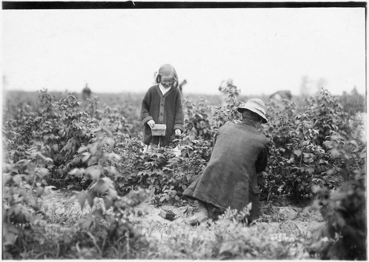 Original Caption: Bertha Brandt, 9 years old. Picks berries on a Rock Creek farm. Rock Creek, Md, June 1909. (Lewis Hine/Photo courtesy of NARA)