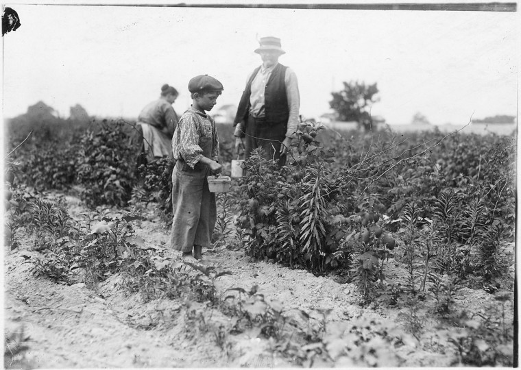 Original Caption: Johnnie Yellow, a young Polish berry picker on Bottomley Farm. Says he is 10 years old and has gone to Biloxi, Miss. for 9 years with family and has worked there in winter and here in summer for three years. He is stunted, being only 39 inches high. Many of these children are stunted. Rock Creek, Md, June 1909. (Lewis Hine/Photo courtesy of NARA)