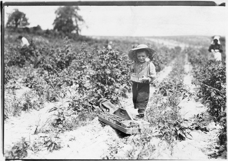 Original Caption: A four year old helper in the berry fields. Mother said, He helps a little. Rock, Creek, Md, June 1909. (Lewis Hine/Photo courtesy of NARA)