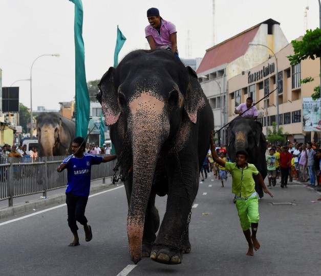 Sri Lankan mahouts ride elephants past spectators in Colombo on April 22, 2017 as part of traditional festival games held to celebrate to mark the Sinhala and Tamil New Year. The new year which is common to both majority Sinhalese and minority Tamils dawned on April 14, but celebrations can go on for weeks. (Ishara S. Kodikara/AFP/Getty Images)