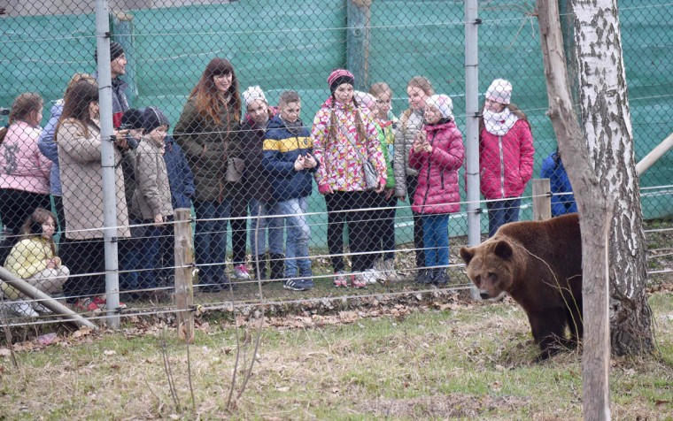 School children look at a bear as they visit a shelter for bears rescued from circuses and private restaurants of Ukraine, near Zhytomyr, some 150 km west of Kiev, on March 24, 2017. Tortured for years by human hands these mighty animals got a chance to start it all over again in a shelter near the city of Zhytomyr, in the northwest of the country. Opened in 2012 by international animal charity Four Paws, the rescue centre soon became one of the biggest sights of the region. (SERGEI SUPINSKY/AFP/Getty Images)