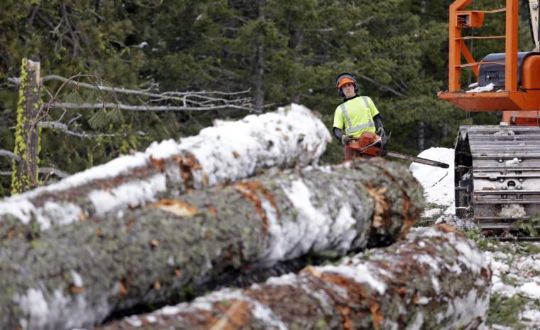 In this Feb. 22, 2017, photo, Trevor Gibson eyes a pile of logs he'll be cutting into shorter lengths at a thinning operation on a 100-acre patch on private land owned by the Nature Conservancy overlooking Cle Elum Lake, in Cle Elum, Wash. As part of a broader plan by the nonprofit environmental group to restore the pine forests of the Central Cascades so they are more resilient to wildfires and climate change, they're cutting down trees to save the forest. (AP Photo/Elaine Thompson)