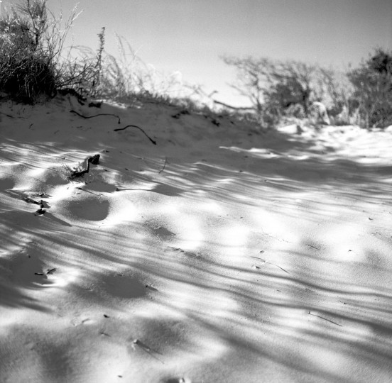 """MICA sophomore Landon Green often shoots photos of Assateague, where he used to go camping as a kid. """"I think it's one of the first landscapes that I saw that really captivated me,"""" he said. (Photo courtesy Landon Green)"""