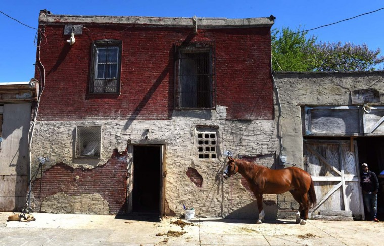 A horse is tied up outside the Fletcher Street Urban Riding Club in North Philadelphia on May 16, 2017. (TIMOTHY A. CLARY/AFP/Getty Images)