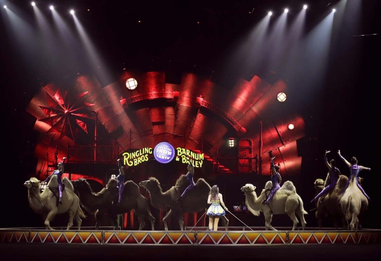 "In this May 4, 2017 file photo, a performance by the Ringling Bros. and Barnum & Bailey Circus features the Desert Goddesses camels, in Providence, R.I. The circus that has wowed crowds for 146 years with its ""Greatest Show on Earth"" will be taking its final bow on Sunday May 21, 2017, when the sold-out 7pm show finishes at the Nassau County Coliseum in Uniondale, New York. (AP Photo/Julie Jacobson, File)"