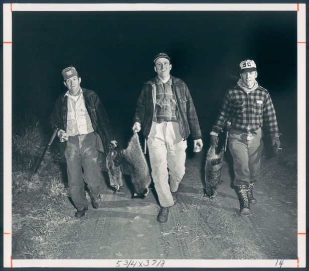 Photo dated 1965 depicting raccoon hunting. (Baltimore Sun archives)