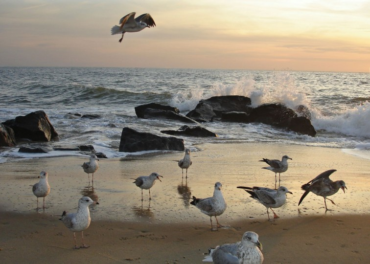 "The early bird catches the good light. ""Good light makes for good photographs,"" as Sun staffer Robert Hamilton put it in his critique of this photo, taken in Ocean City at sunrise by Luanne Rushing."