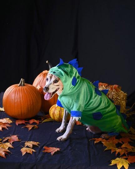 Winston, an 8-year-old Beagle, poses in a dinosaur costume. (Karl Merton Ferron/Baltimore Sun)
