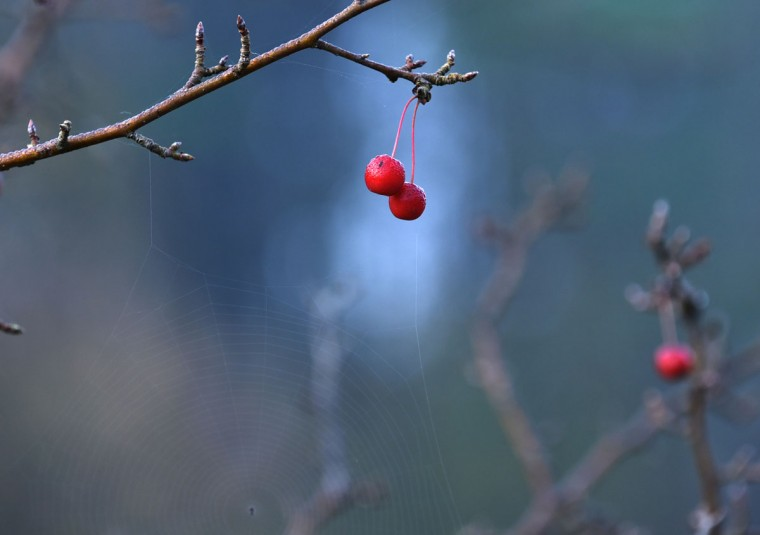 Berries and a spider web are on a tree near Loch Raven Reservoir. (Barbara Haddock Taylor/Baltimore Sun)