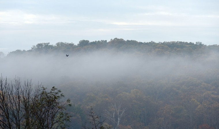 A bird flies over Loch Raven Reservoir. (Barbara Haddock Taylor/Baltimore Sun)