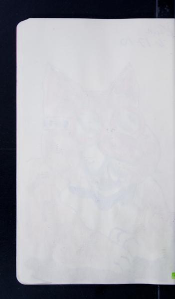 19816 29