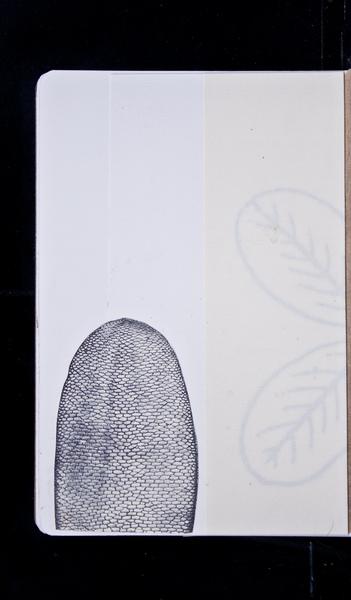 S66679 17