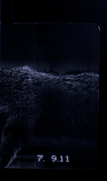 S146581 24