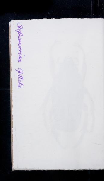 S171959 25
