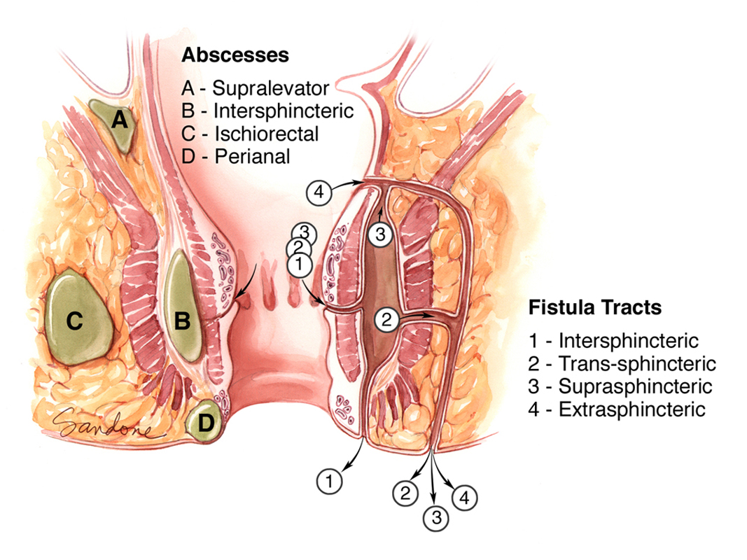 Perianal region anatomy