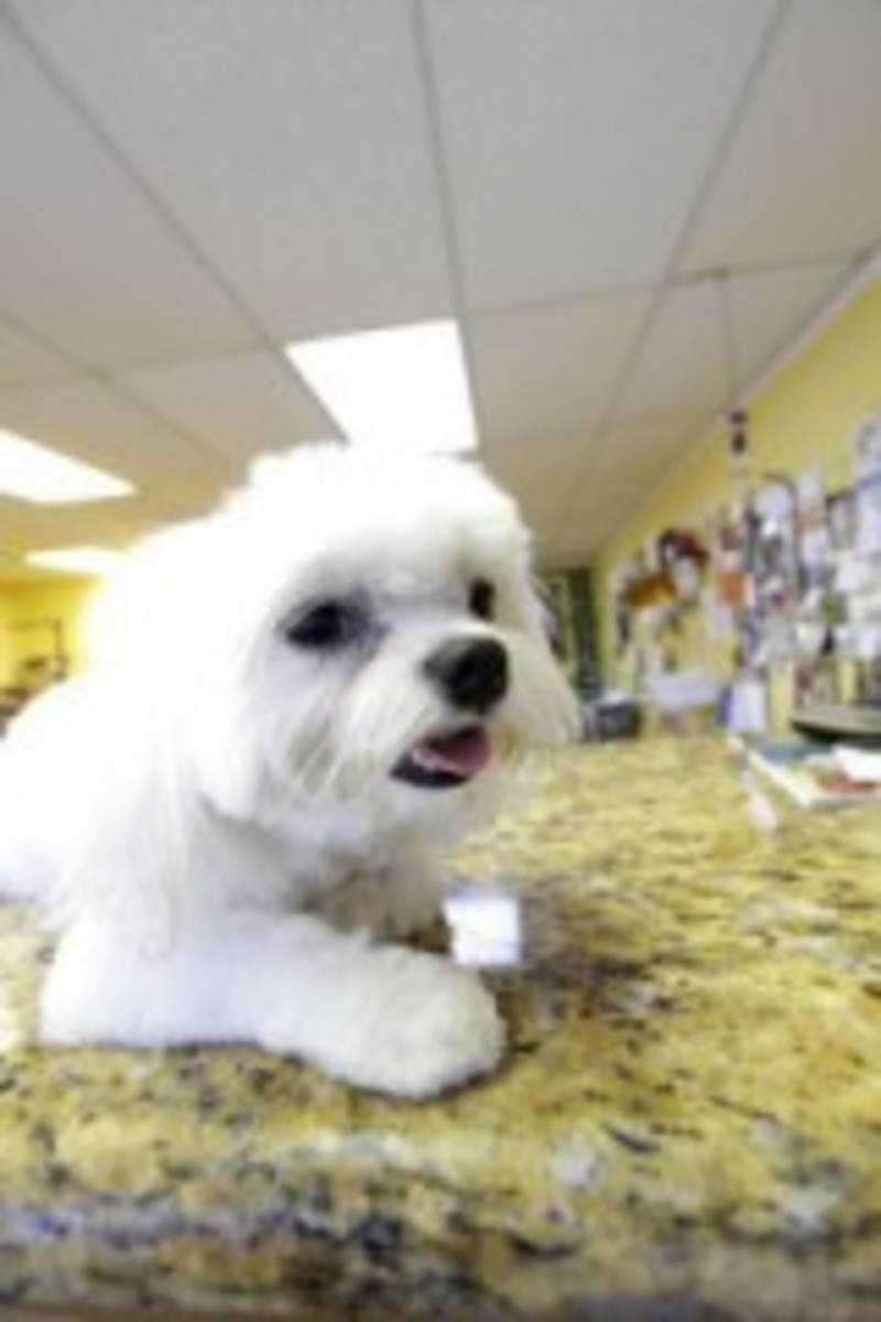 Pet grooming the mutt hutt dog grooming salon by bobie venice fl the mutt hutt grooming salon by bobie has been offering pet care and grooming services in venice fl for over 12 years we provide quality pet grooming solutioingenieria Gallery