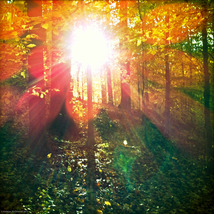 Autumn_scenes_1