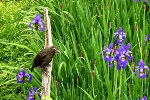 Garden-birds5435_1