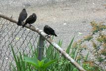 Garden-birds5434_1