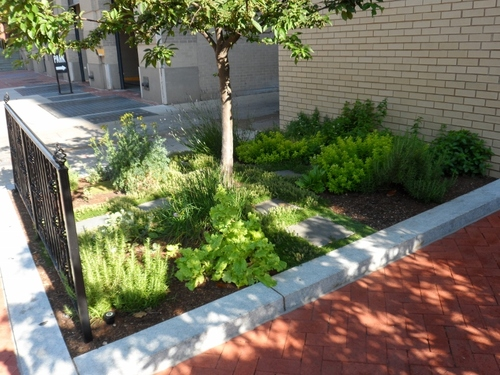 20130601_sidewalk_herb_garden_(800x600)