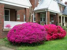 Brookland-garden12888