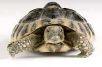 Turtle-shell-1