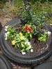 Tire_flower_planter