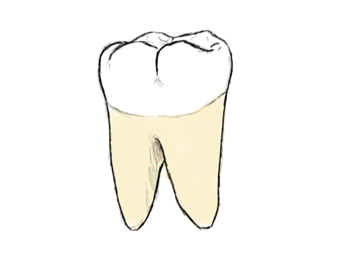 Lower right first molar