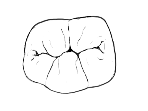 Illustration of the occlusal surface of a lower right first molar