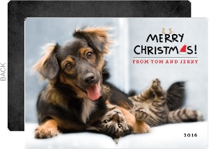 Cute Pets Christmas Greeting Photo Card