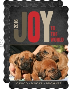 Joy Of Christmas Pet Photo Card