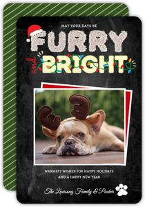 Furry & Bright Typography Pet Photo Holiday Card