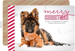Simple Red Stripes Dog Christmas Photo Card
