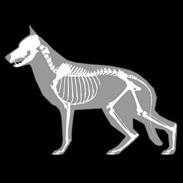 3D canine anatomy