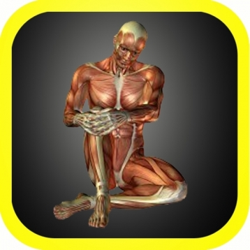 3D Visual Body Anatomy
