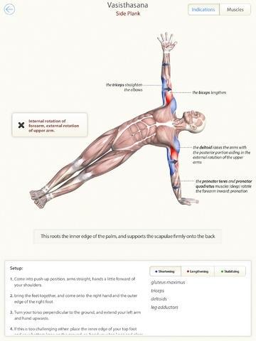 3D Yoga Anatomy