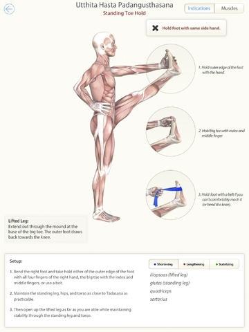 3D Yoga Anatomy Lite | Guide & Reference