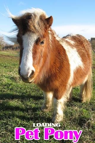 A Pet Pony