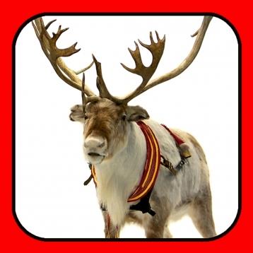 A Reindeer Cam & More