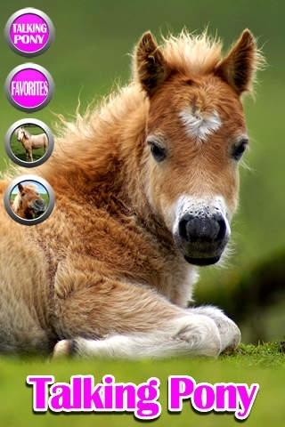 A Talking Pony Friend