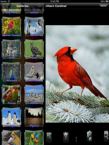 All Birds Wallpapers